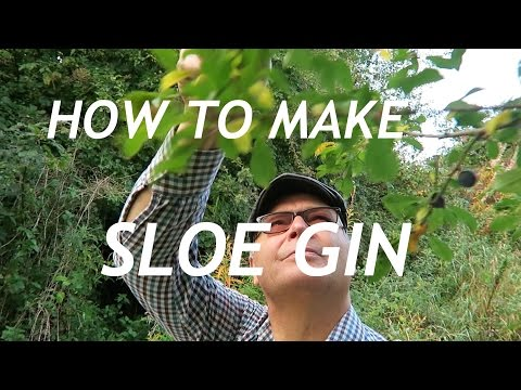 (HD) Sloe gin. how to make sloe gin. country recipe at end of video.