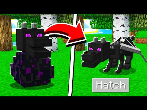 (New) How to hatch the ender dragon egg in minecraft tutorial!