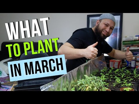 (New) What can i grow in march - what to plant in march