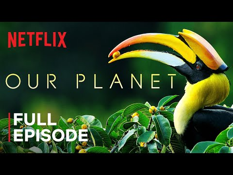 (New) Our planet | forests | full episode | netflix