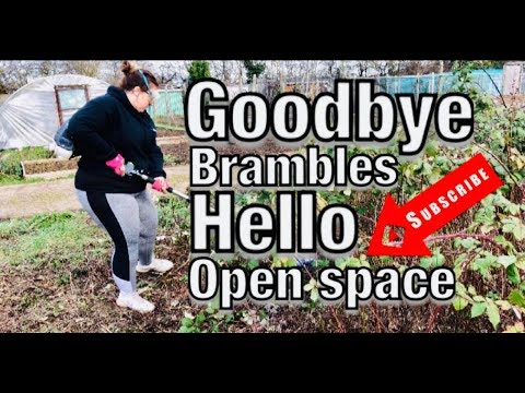 (New) How to clear brambles fast: new allotment plot (part 1)
