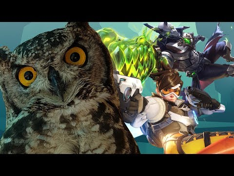 (New) An actual review of overwatch e paladins
