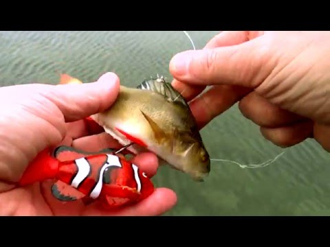 (HD) Underwater experiment: fish eat baby nemo. pike attack fishing dead-bait with robot-toy inside.