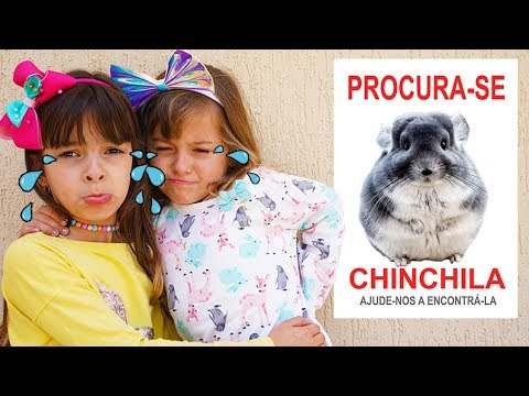 (New) Laurinha e helena perdemos nossa chinchila 🐵 laurinha and helena lost our chinchilla