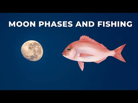 (New) How the moon and tides affect bite times for fish like snapper, trevally and kingfish.