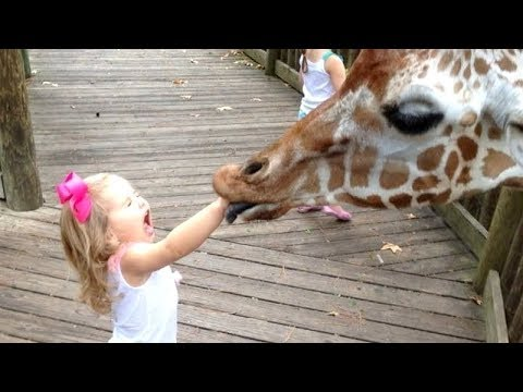 (VFHD Online) Forget cats! funny kids vs zoo animals are way funnier! - try not to laugh
