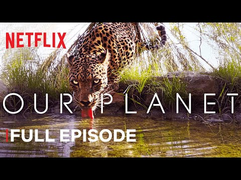 (New) Our planet | from deserts to grasslands | full episode | netflix