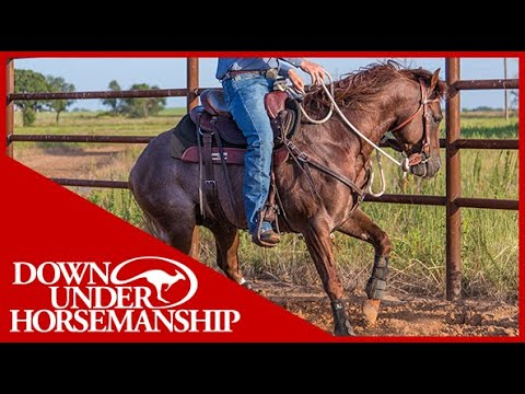 (New) Clinton anderson: working with hot and busy-minded horses - downunder horsemanship