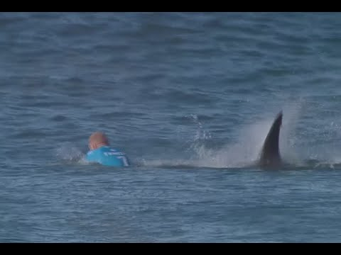 (Ver Filmes) Jaw-dropping: surfer fights off shark attack live on tv in s. african competition