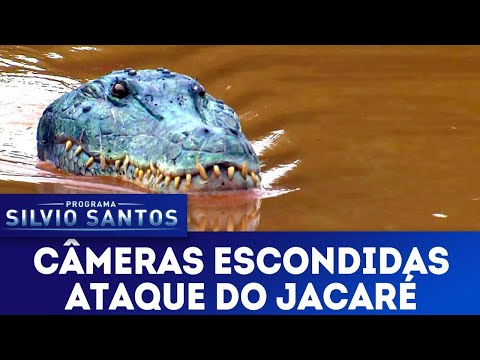 (New) Ataque do jacaré - crocodile attack prank | câmeras escondidas (24 03 19)