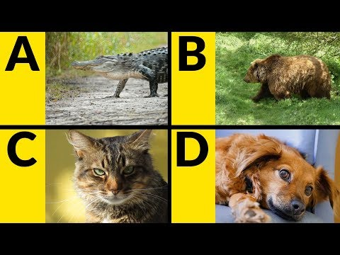 (VFHD Online) Abc animals for children - learn alphabet with animals for toddlers e kids