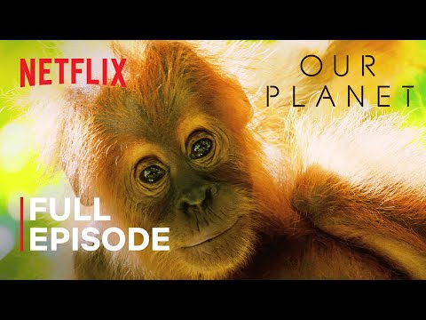 (New) Our planet | jungles | full episode | netflix